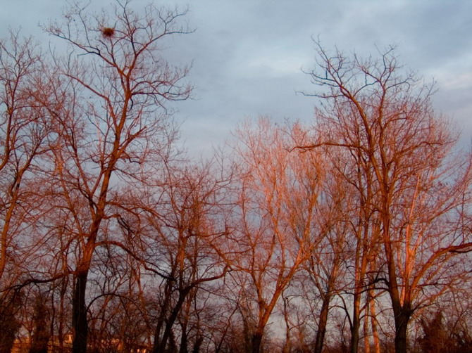home, red trees