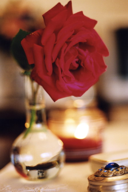 home, red rose