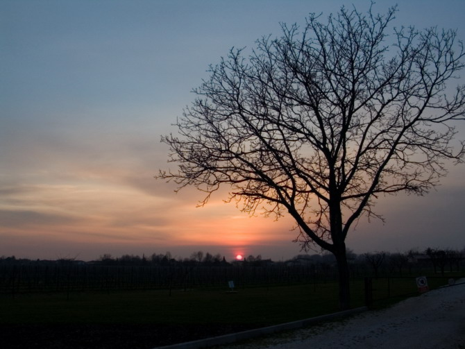 fiume, sunset tree