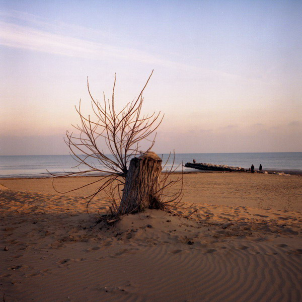 lignano, stump