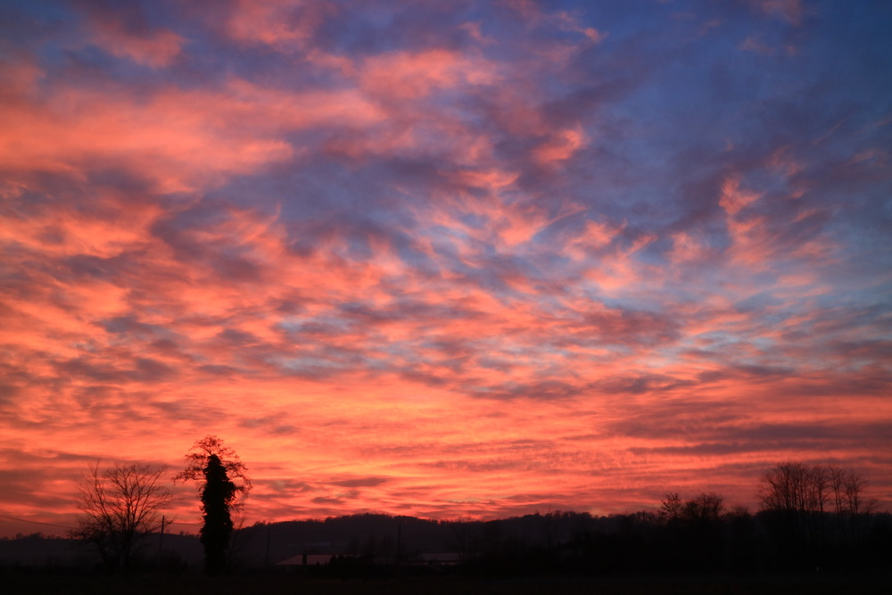 udine, rose sunset
